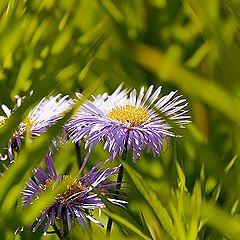 "фото ""Flower..."""