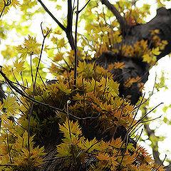 """photo """"Whether Autumn, whether Spring"""""""