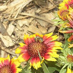 """photo """"Macro Bee"""""""