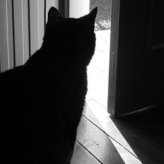 """фото """"black cat"""""""