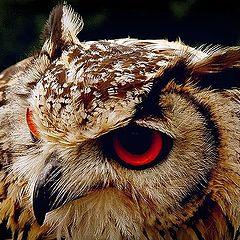 """фото """"big red eyes"""""""