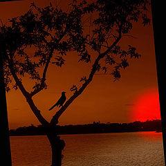 """photo """"blackbird sunset"""""""