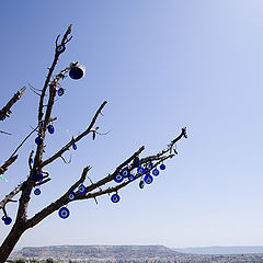 "photo ""Tree in the center of Turkey"""