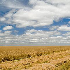 """фото """"Пшеничный путь"""""""