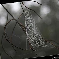 "photo ""small wonders of nature - 2"""