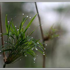"photo ""small wonders of nature - 3"""