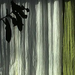 "фото ""summer morning at my window"""