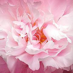 """фото """"Розовые страсти"""""""