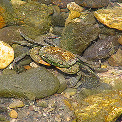 "photo ""The crab"""