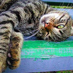"""фото """"кот"""""""