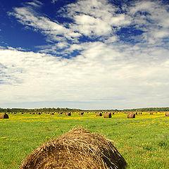 """фото """"hay hay it's saturday"""""""
