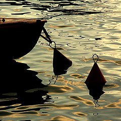 "photo ""In evening light..."""