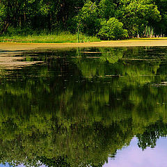 """photo """"The Reflections"""""""