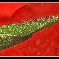 """фото """"В каплях дождя"""""""