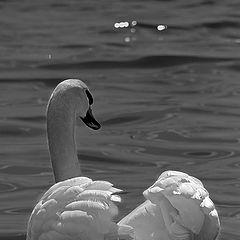 """фото """"The sacred bird"""""""