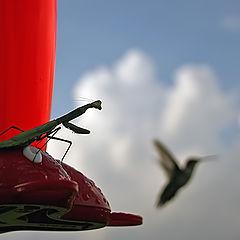 """фото """"...Я научу тебя летать...!"""""""