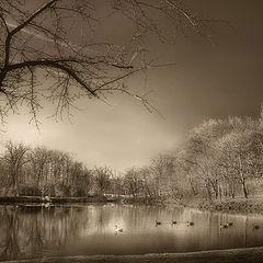 "photo ""The Lake"""