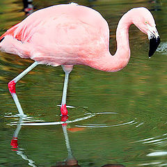 "фото ""Pink reflexes"""