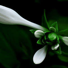 """фото """"In the green"""""""
