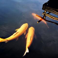 """photo """"three fishes"""""""