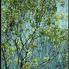 "фото ""Autumn Rain"""