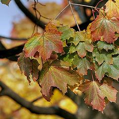 """фото """"Осенние краски"""""""