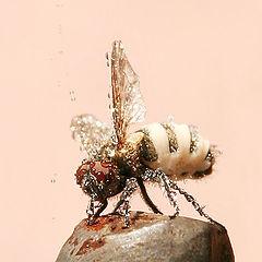 "фото ""Мокрая муха"""