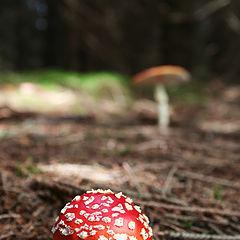 """фото """"Mushrooms"""""""