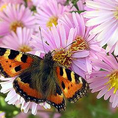 "album ""Butterflies"""