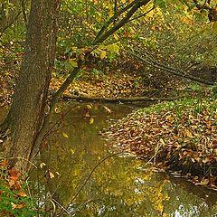"photo ""Whild river"""