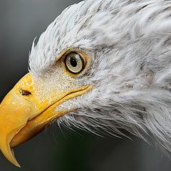 "фото ""Eagle"""