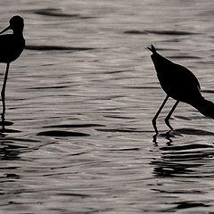 "фото ""Birds"""