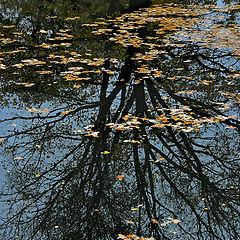 """фото """"Осенний пруд"""""""