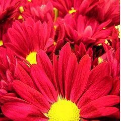 "photo ""Flowers, simply."""