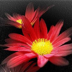 """фото """"Магия  цветения"""""""