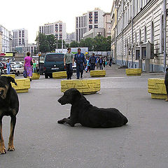 "photo ""City of banks and vagrant dogs."""