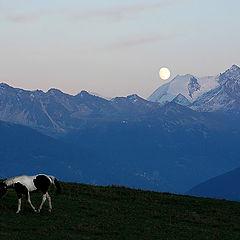 """фото """"Брела одинокая лошадь,за ней наблюдала Луна"""""""