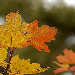 "photo ""Leaves..."""