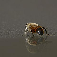 "photo ""Shy Bee"""