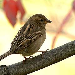 """фото """"Sparrow #2"""""""