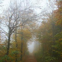 "фото ""Foggy Weather"""