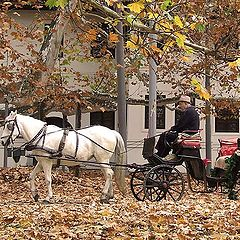 "photo ""Carpet of leaves"""