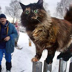 "фото ""Охотничий кот"""