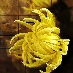 """фото """"Огонь желтой хризантемы"""""""