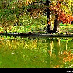 "photo ""Autumn colours"""