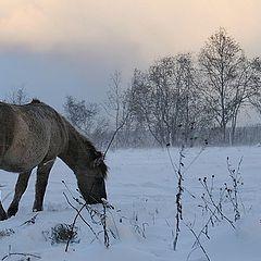"фото ""Snow is coming"""