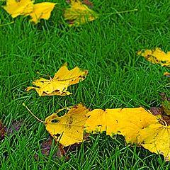 """фото """"Осенний этюд в желто-зеленых тонах"""""""