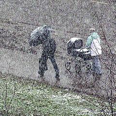 """photo """"Snow & life."""""""