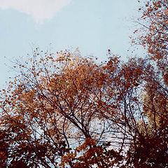"""фотоальбом """"Осень 2006"""""""