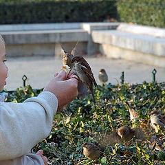 """photo """"Bonne Appetite, Sparrows!"""""""